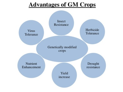 genetically-modified-crops-and-food-securityscientific-facts-3-638