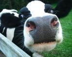 Milk.6